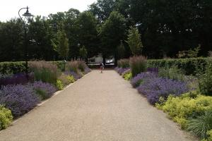Picture of Lavender on the Rose Walk at the Level