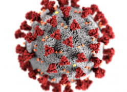 Computer generated image of a corona virus