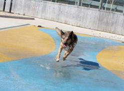 Dog splashing in a water feature